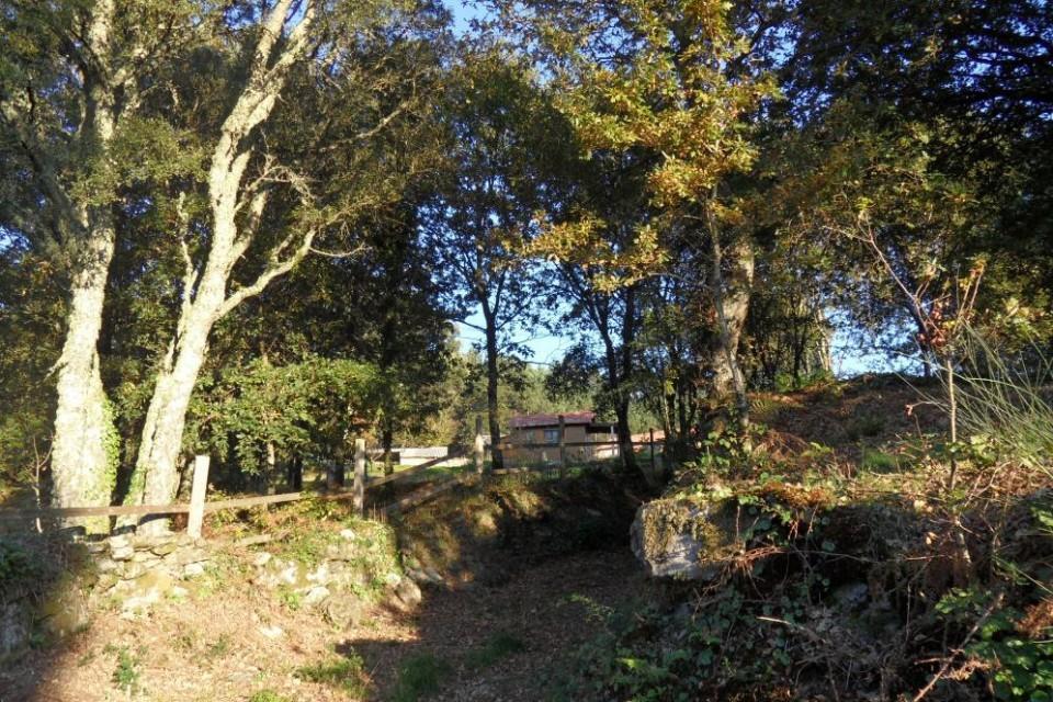 Senderos y bosques en la Quinta da Calma