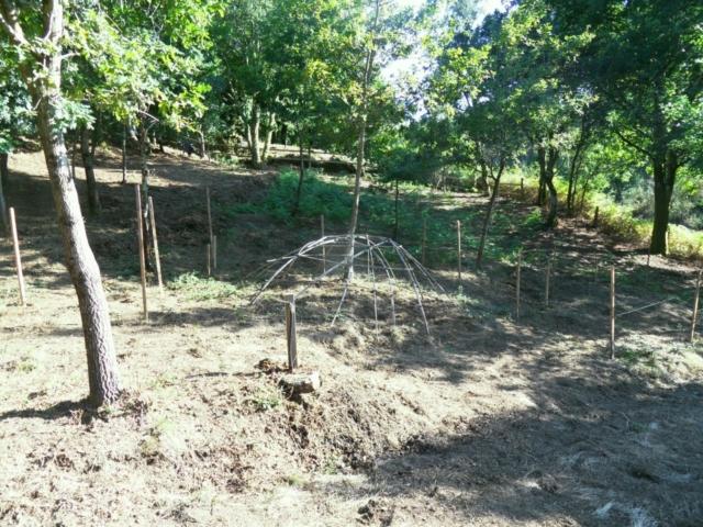 Bosque: Área protegida para zarzamora